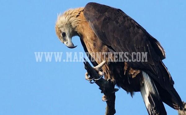 コシタプ野生動物保護区 7日間